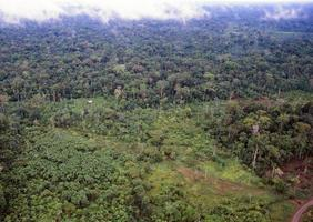 ontbossing van het regenwoud foto