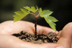 jonge boom