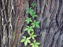 klimplant plant foto