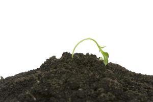 jonge kiemplant wordt uitgedroogd foto
