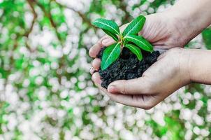kind hand met een verse jonge plant. foto