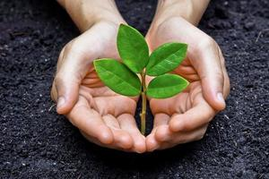 twee handen houden en zorgzame jonge groene plant foto