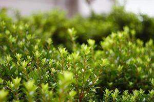 blad in de bomen foto