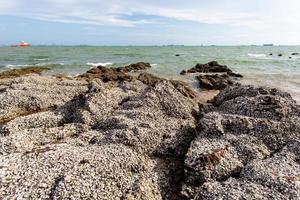 de overblijfselen van vele schelpen op de stenen