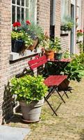 ontluikende en bloeiende planten in potten