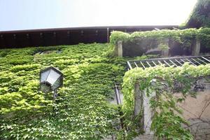 groen overwoekerd oud Italiaans huis aan het Comomeer in Lombardije foto
