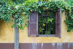 gele hek op het platteland met overwoekerde wijnstokken foto