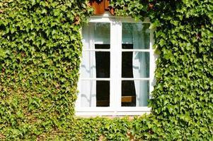 raam in klimop foto