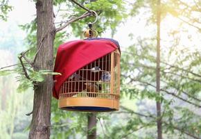 vogelkooi op de boom foto