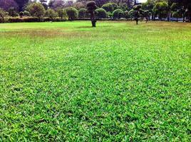 groen gazon in tuin mooi foto