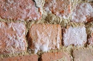 muur met schimmelzwam