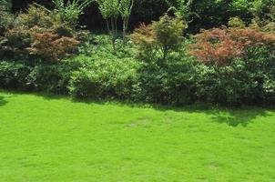 rustige tuin foto