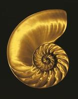 gouden nautilus foto