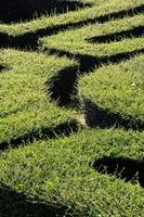 labyrint doolhof foto