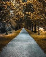 weg tussen geelbladerde bomen