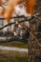 eekhoorn cracker eten op boomtak foto