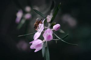 de bij en de bloem foto