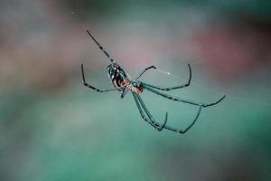 foto van zwarte spin