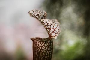 rode getextureerde plant