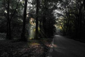 zon werpt licht op de weg foto