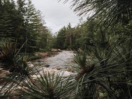 bomen en planten dichtbij rivier foto