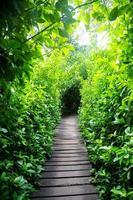 houten trappen in bos foto
