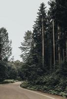 weg in de buurt van hoge bomen foto