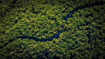 luchtfoto van een weg en groene bomen foto