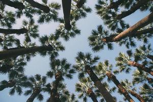 palmbomen boven het hoofd foto