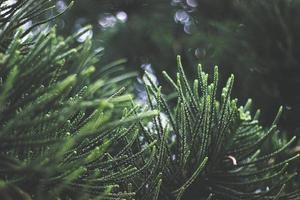 verse groene plant foto