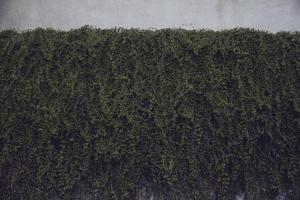 groene planten op de muur