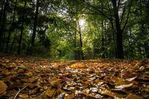 bladeren op de grond foto