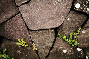 leven achter de stenen muur foto