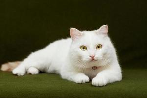 witte kat liggend op groene deken