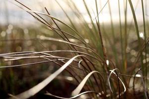 gras in zonlicht foto