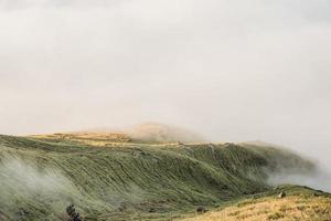 heuvelachtig groen veld foto