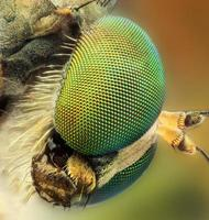 metalic bee extreem portret foto