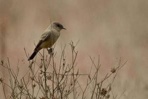 vogel op een tak foto