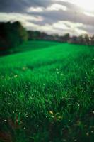 rollend groen