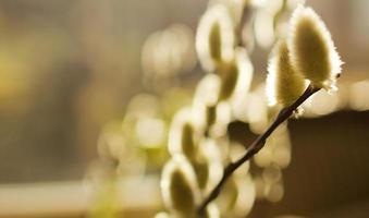 lente plant foto
