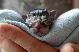 verzorging van een kitten foto