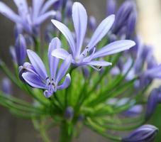 exotische delicate bloem foto