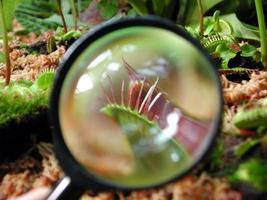 vergrootglas op een kleine plant foto