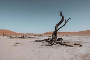 kale boom midden in de woestijn foto