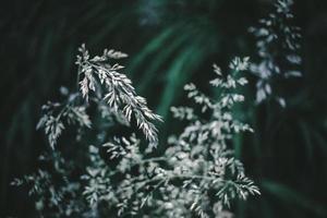 selectieve aandacht fotografie van witte bloemen foto