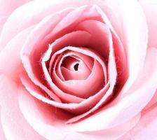 papieren rozen achtergrond foto