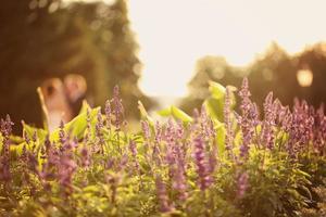 lavendel met bruid en bruidegom op de achtergrond foto