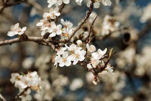 vruchten bloeien foto