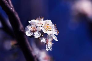 prachtige bloesem in het voorjaar foto