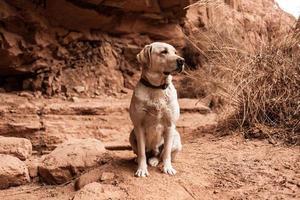 hond in de natuur kijkt in de verte foto